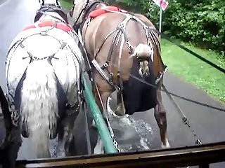 Peeing Horse 1