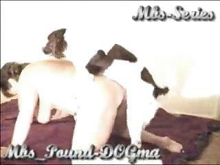Pervcity Dog Porn Threesome Milfs